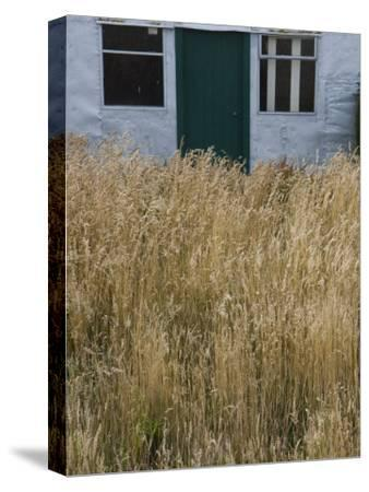 Tall Grasses Growing Up to the Door and Windows of a Building-Kent Kobersteen-Stretched Canvas Print