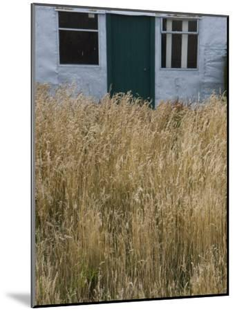 Tall Grasses Growing Up to the Door and Windows of a Building-Kent Kobersteen-Mounted Photographic Print