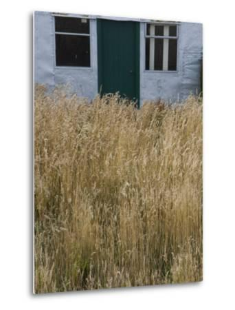 Tall Grasses Growing Up to the Door and Windows of a Building-Kent Kobersteen-Metal Print