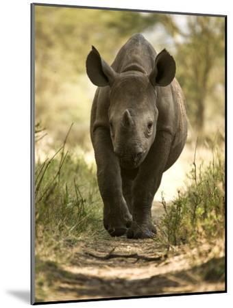 Elvis, a Black Rhino Calf-Michael Polzia-Mounted Photographic Print