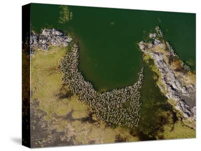 Flamingos and Land Formations Along the Shore of Lake Turkana-Michael Polzia-Stretched Canvas Print