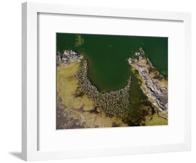 Flamingos and Land Formations Along the Shore of Lake Turkana-Michael Polzia-Framed Photographic Print