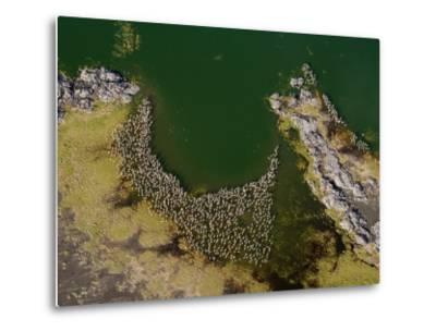 Flamingos and Land Formations Along the Shore of Lake Turkana-Michael Polzia-Metal Print
