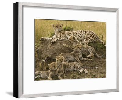 Cheetah Family: Mother and Cubs-Michael Polzia-Framed Photographic Print