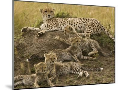 Cheetah Family: Mother and Cubs-Michael Polzia-Mounted Photographic Print