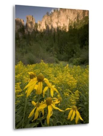 Yellow Wildflowers Growing in Spearfish Canyon, South Dakota-Phil Schermeister-Metal Print