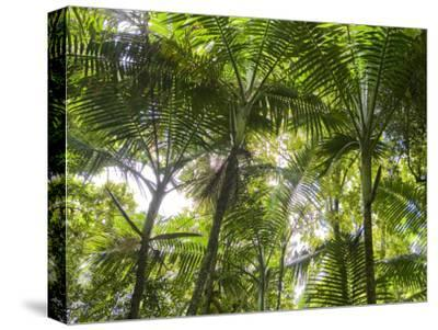 Tropical Rainforest Spreads in All Directions on a Sunny Day-Taylor S^ Kennedy-Stretched Canvas Print