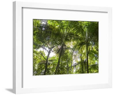 Tropical Rainforest Spreads in All Directions on a Sunny Day-Taylor S^ Kennedy-Framed Photographic Print
