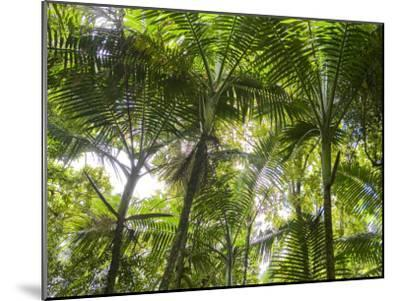 Tropical Rainforest Spreads in All Directions on a Sunny Day-Taylor S^ Kennedy-Mounted Photographic Print