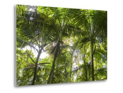 Tropical Rainforest Spreads in All Directions on a Sunny Day-Taylor S^ Kennedy-Metal Print