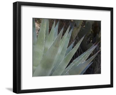 Agave Plant in the Foothills Near Cave Creek-Scott Warren-Framed Photographic Print