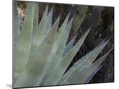 Agave Plant in the Foothills Near Cave Creek-Scott Warren-Mounted Photographic Print