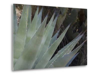 Agave Plant in the Foothills Near Cave Creek-Scott Warren-Metal Print
