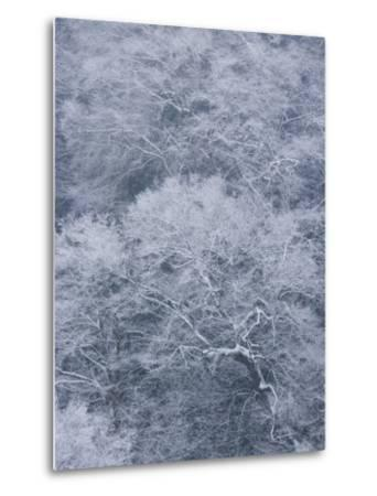 January Storm Covers Newfound Gap with Snow-Michael Melford-Metal Print