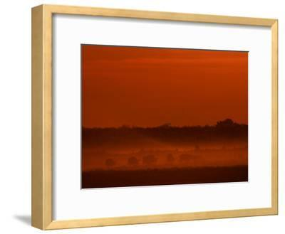 Herd of African Buffalo, Syncerus Caffer, in Mist at Twilight-Beverly Joubert-Framed Photographic Print