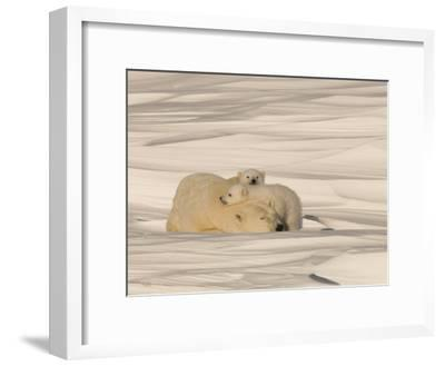 Polar Bear Sleeping with Her Cubs in a Snowy Landscape-Norbert Rosing-Framed Photographic Print