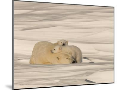 Polar Bear Sleeping with Her Cubs in a Snowy Landscape-Norbert Rosing-Mounted Photographic Print