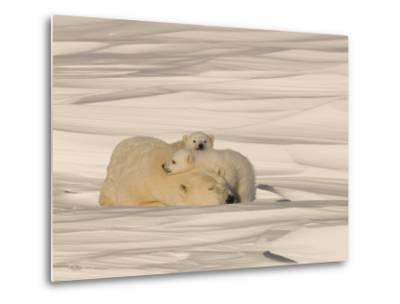 Polar Bear Sleeping with Her Cubs in a Snowy Landscape-Norbert Rosing-Metal Print