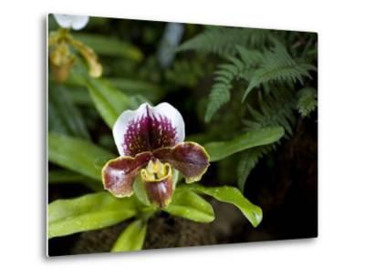 Lady's Slipper Orchid at the Botanic Garden-David Evans-Metal Print