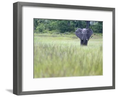 Feeding Elephant in the Grass with Ears Extended-Karine Aigner-Framed Photographic Print