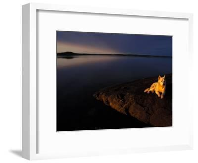 Husky Reclines on the Shore-Nick Norman-Framed Photographic Print
