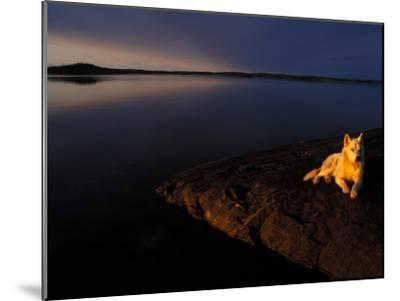 Husky Reclines on the Shore-Nick Norman-Mounted Photographic Print