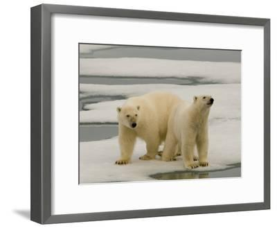 Two Polar Bears Stand on a Piece of Ice-Norbert Rosing-Framed Photographic Print