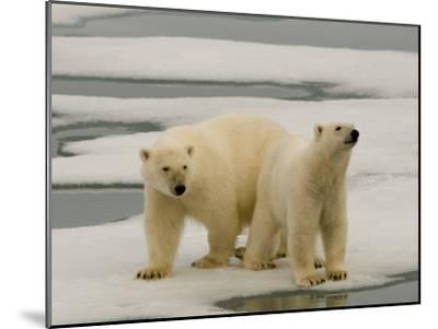 Two Polar Bears Stand on a Piece of Ice-Norbert Rosing-Mounted Photographic Print