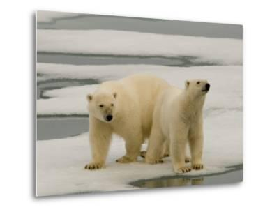 Two Polar Bears Stand on a Piece of Ice-Norbert Rosing-Metal Print