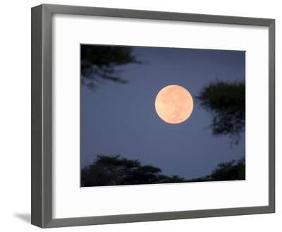 Full Moon Rises over the Serengeti Plains-Ralph Lee Hopkins-Framed Photographic Print
