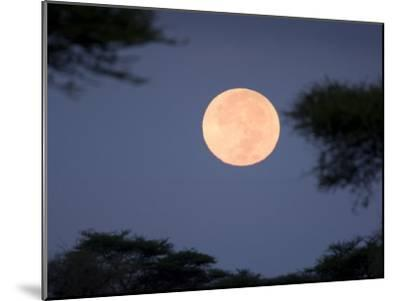 Full Moon Rises over the Serengeti Plains-Ralph Lee Hopkins-Mounted Photographic Print
