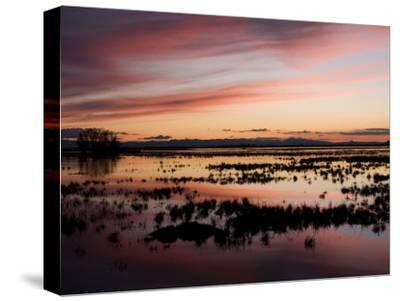 Sunset over Wetlands at the Merced National Wildlife Refuge-Marc Moritsch-Stretched Canvas Print