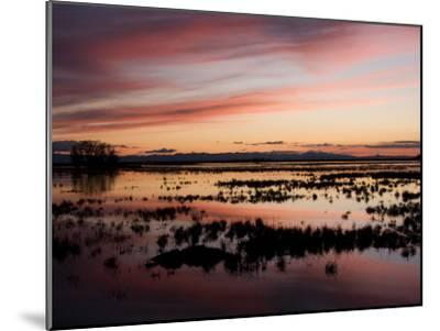Sunset over Wetlands at the Merced National Wildlife Refuge-Marc Moritsch-Mounted Photographic Print