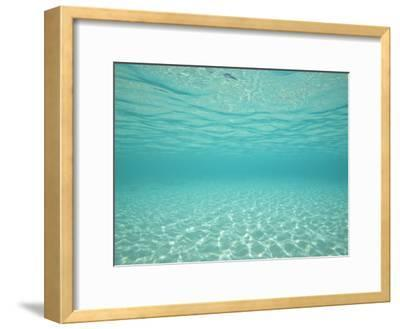 Underwater Shot of Clear Blue Water and White Sand-Michael Melford-Framed Photographic Print