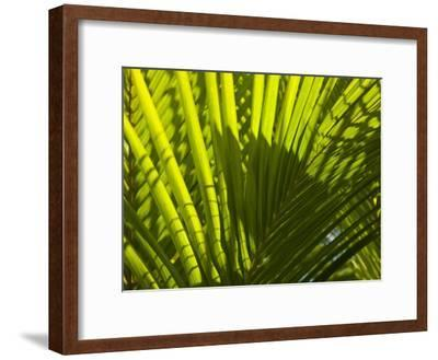 Close Up Detail of a Coconut Palm Frond-Beverly Joubert-Framed Photographic Print