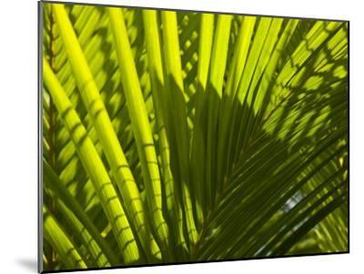 Close Up Detail of a Coconut Palm Frond-Beverly Joubert-Mounted Photographic Print