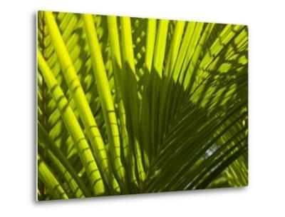 Close Up Detail of a Coconut Palm Frond-Beverly Joubert-Metal Print