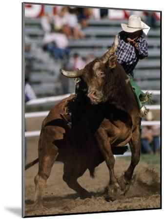 Rodeo Competitor in a Steer Riding Event-Chris Johns-Mounted Photographic Print