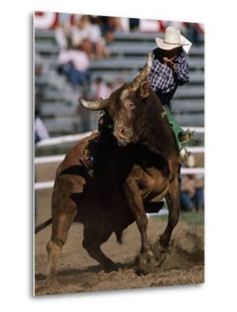 Rodeo Competitor in a Steer Riding Event-Chris Johns-Metal Print