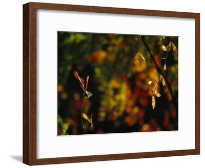 Leaves in a Fantastic Array of Autumn Colors-Raymond Gehman-Framed Photographic Print