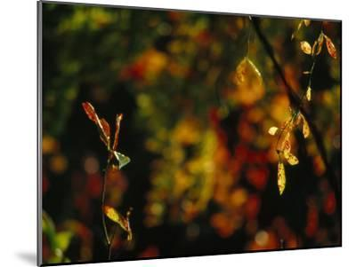 Leaves in a Fantastic Array of Autumn Colors-Raymond Gehman-Mounted Photographic Print