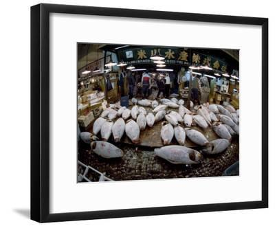 Tuna Caught in the Indian Ocean Await Buyers at Tsukiji Fish Market-Paul Chesley-Framed Photographic Print