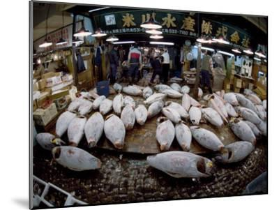 Tuna Caught in the Indian Ocean Await Buyers at Tsukiji Fish Market-Paul Chesley-Mounted Photographic Print