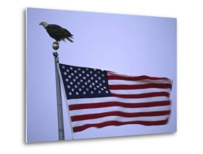 Bald Eagle Sits on a Flagpole Above a Fluttering American Flag-Michael Melford-Metal Print