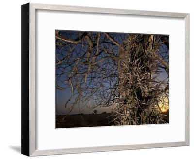 Tree Scorched from Spring Burning in the Flint Hills-Jim Richardson-Framed Photographic Print