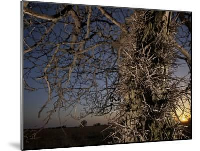 Tree Scorched from Spring Burning in the Flint Hills-Jim Richardson-Mounted Photographic Print