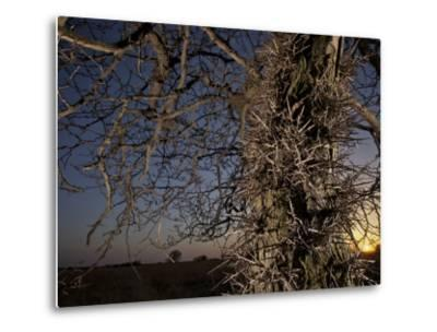 Tree Scorched from Spring Burning in the Flint Hills-Jim Richardson-Metal Print