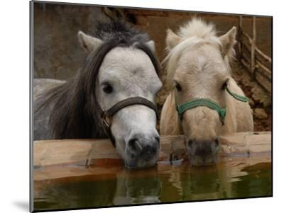 Two Ponies Meet for a Refreshing Drink of Water-Medford Taylor-Mounted Photographic Print