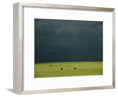 Ominous Storm Clouds Gather over a Field of Grazing Cattle-Peter Carsten-Framed Photographic Print