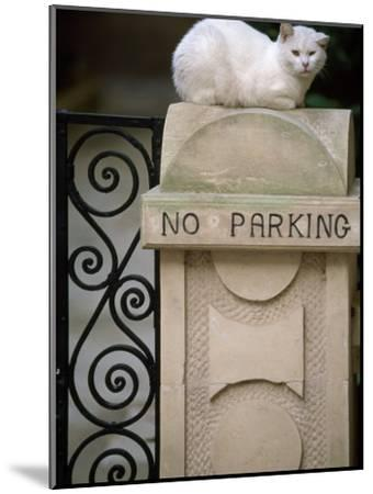 "White Cat Sits on a ""No Parking"" Sign-Michael Melford-Mounted Photographic Print"